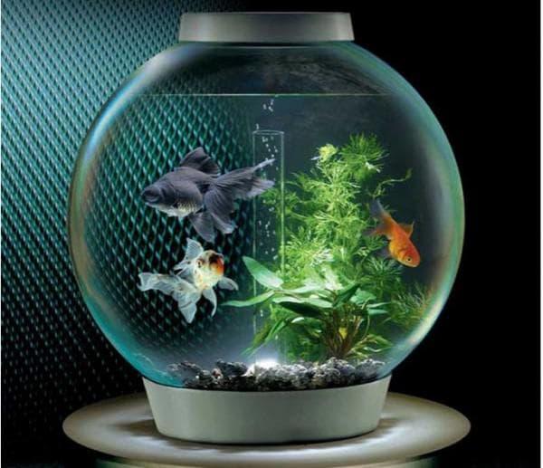 Круглый аквариум с LED подсветкой