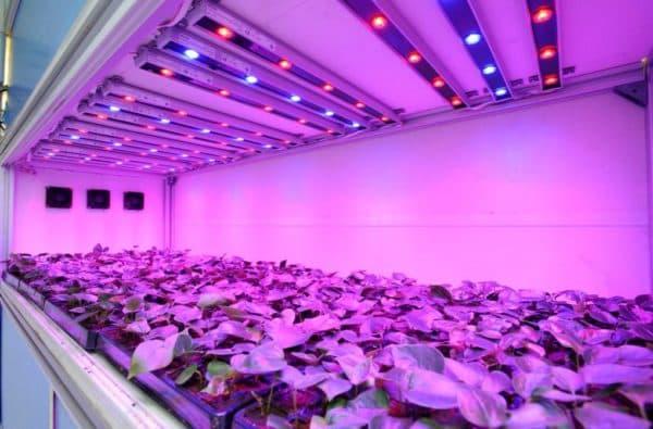 LED досветка рассады