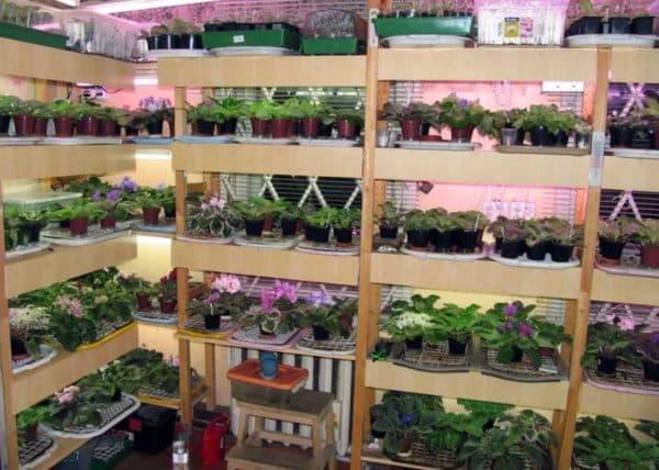 Стеллаж для растений с люминесцентной подсветкой