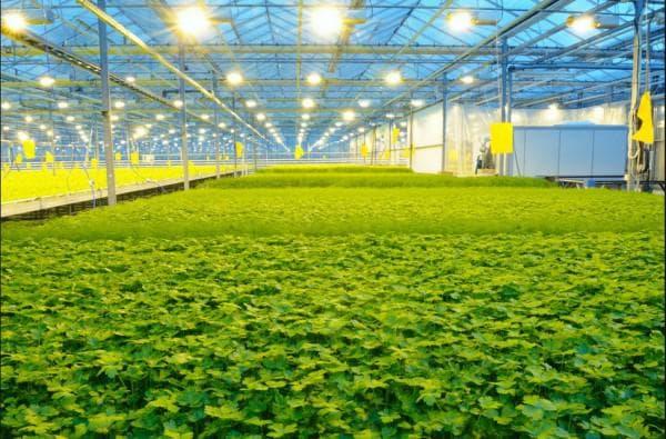 Теплица с LED - лампами для подсветки растений