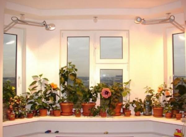Подсветка цветов дома светодиодами