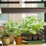 Искусственный свет люминесцентных ламп для роста и цветения растений