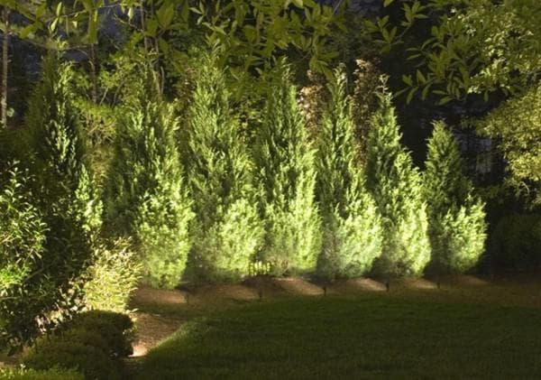 Подсветка растений на улице светодиодными прожекторами