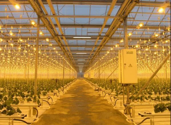 Досветка растений в теплице