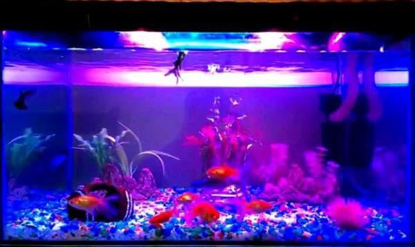 Подсветка универсального аквариума светодиодной лентой
